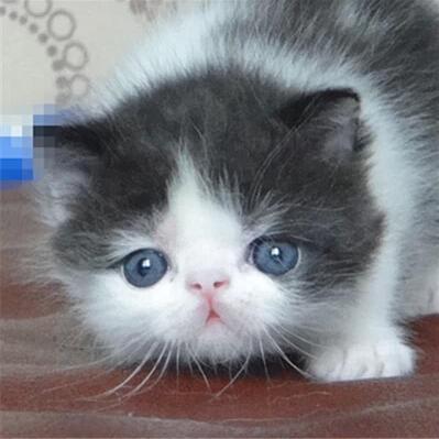 加菲猫-开发区宠物店