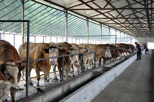 【牛棚】厂家,价格,图片图片