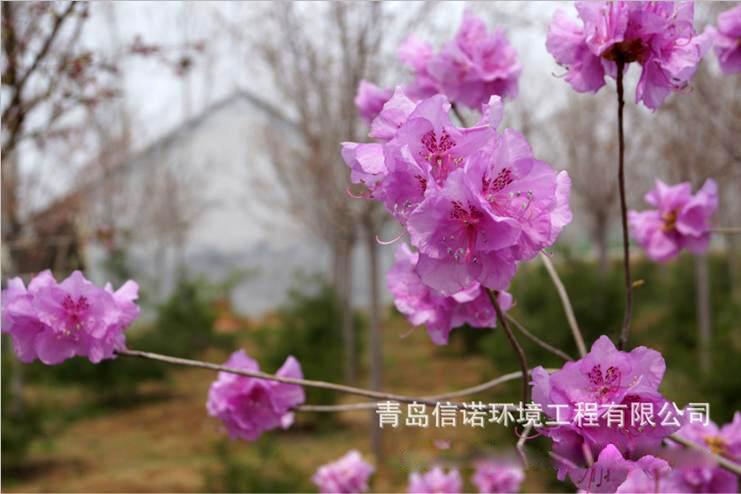 雪映红梅葫芦丝曲谱展示