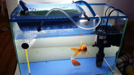 昆明鱼缸:水族过滤器及其挑选和使用方法
