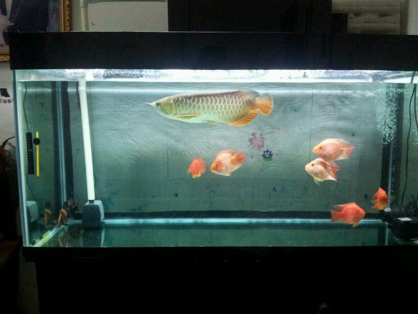鱼缸怎么粘步骤图片
