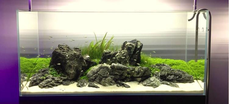 昆明生态鱼缸:水草造景缸的日常维护与管理