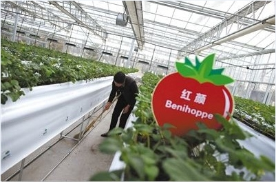 草莓有什么营养价值?