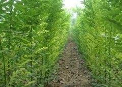 苗木生长过程中的6种施肥管理技术