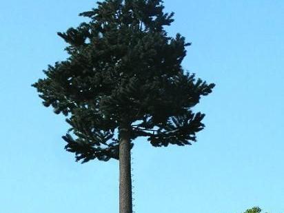 简述仿真树大致的种类