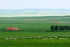 玉米DDGS饲料对不同畜禽的营养价