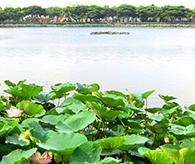 衡水湖风光秀丽景色美