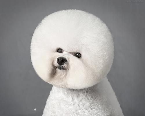 狗狗洗澡后,怎样做到很好的梳理毛发
