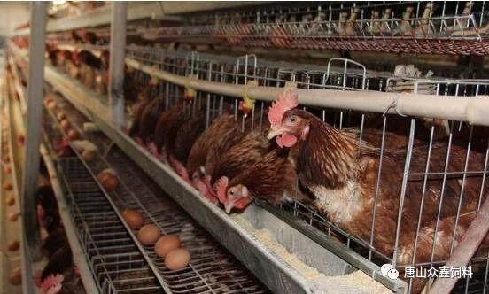 增益养鸡篇