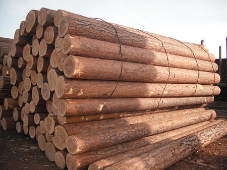 影响建筑木方品质的原因