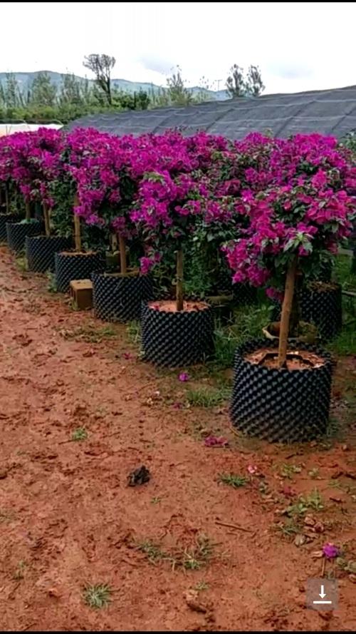 苗圃冬季苗木养护知识