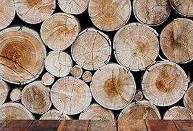 木材的基本特性