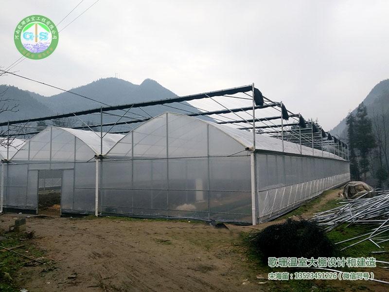 湖北恩施龙凤镇青堡村连栋薄膜温室