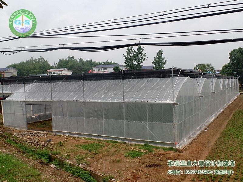 湖北黄岗浠水县连栋薄膜温室