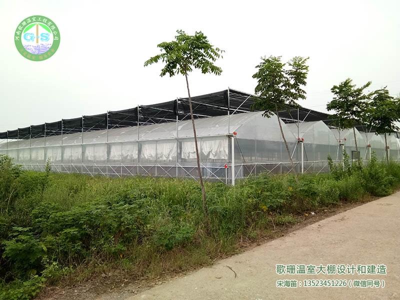 【歌珊温室】焦作温县4栋双拱草莓大棚完工