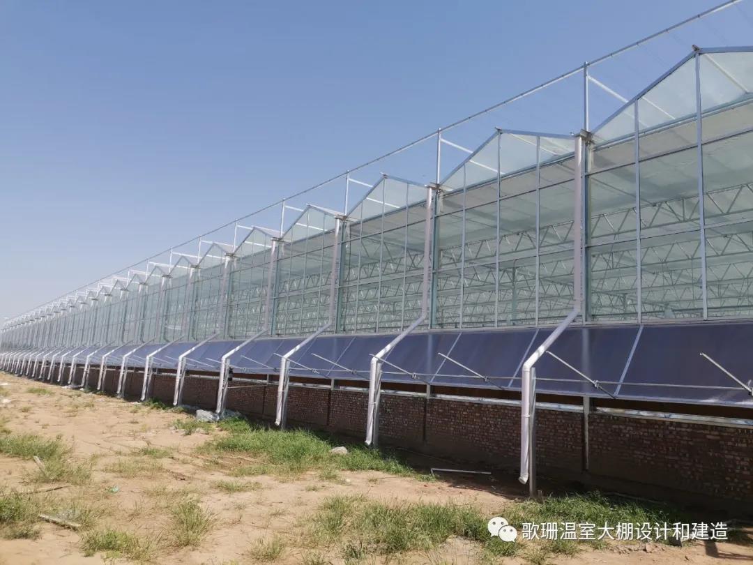 【歌珊温室】焦作市博爱县金西农业连栋PC阳