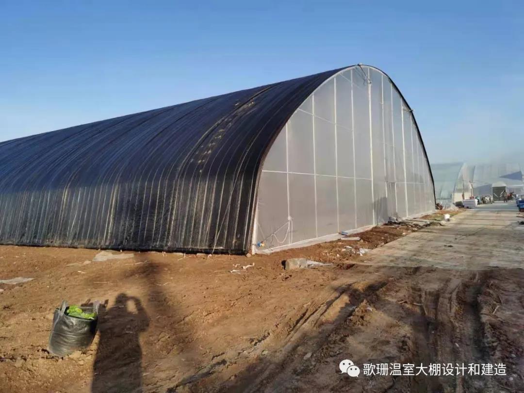 【歌珊温室】河北唐山大跨度椭圆管单体拱棚