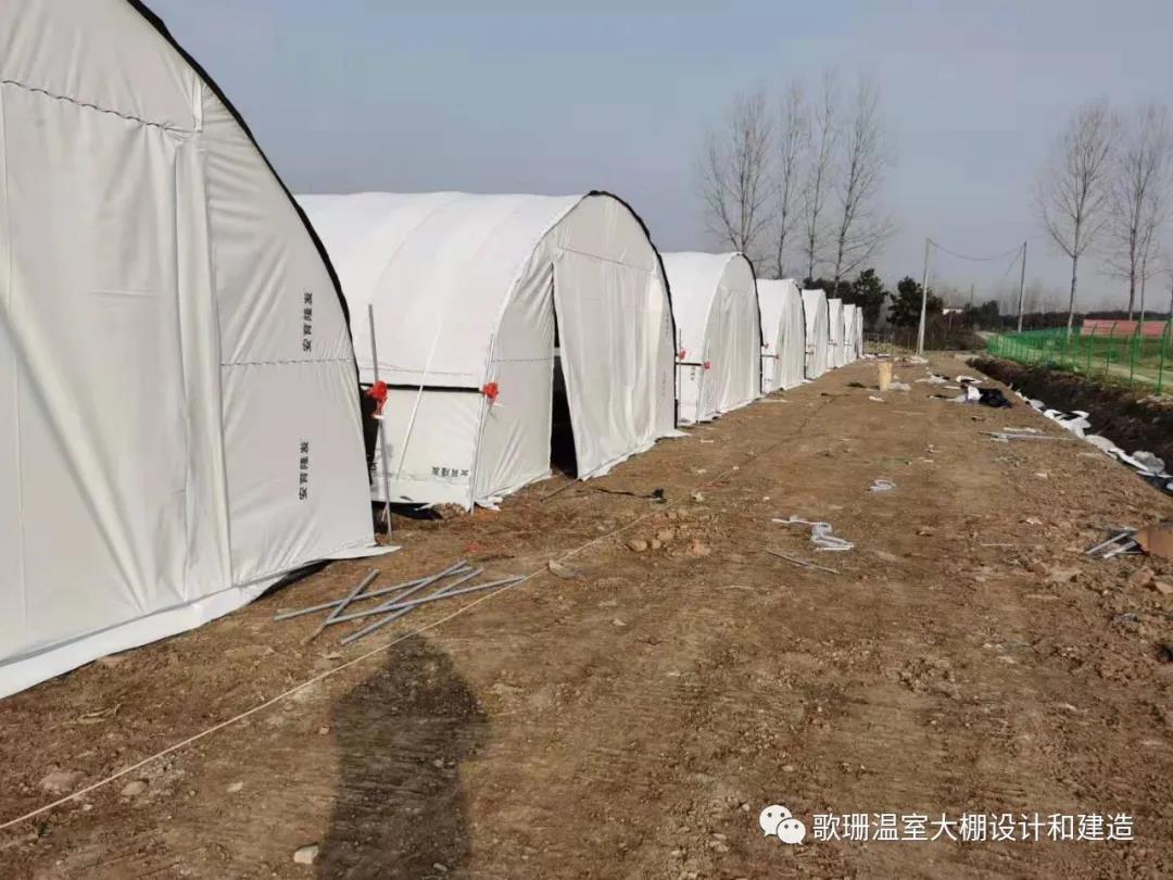 【歌珊温室】湖北省老河口市8栋椭圆管养殖
