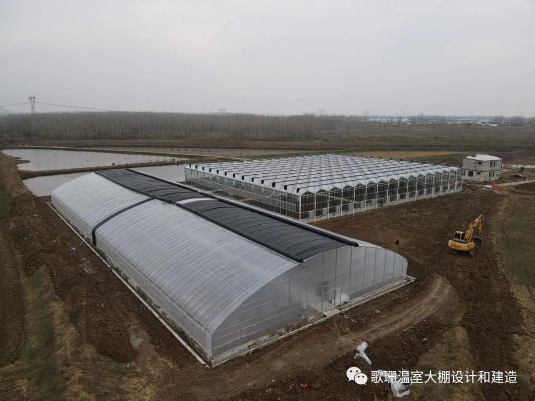 【歌珊温室】安徽淮南30米大跨度椭圆管带棉
