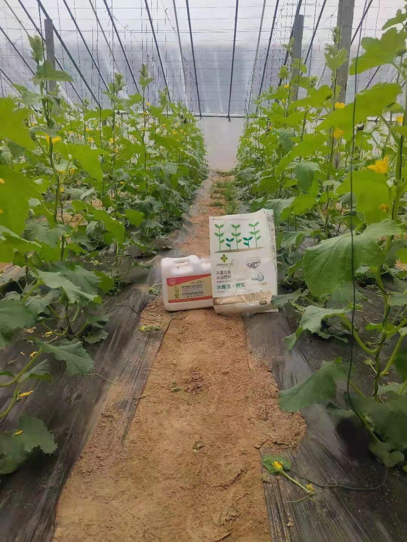 助農豐收我們在行動——農技服務