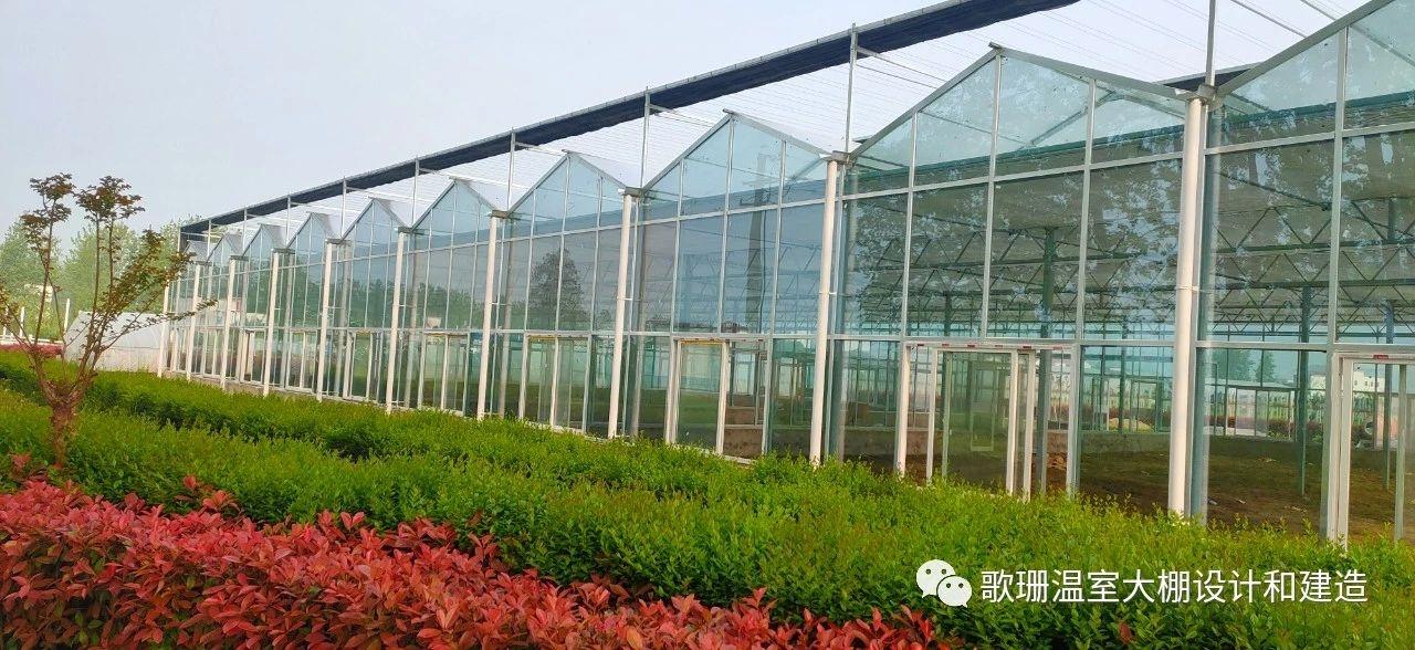 【歌珊温室】信阳市固始县连栋PC阳光板(玻
