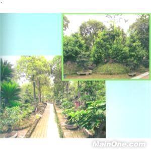 【园林实景】厂家,价格,图片_都江堰市永兴植物园