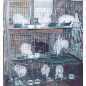 宠物兔笼价格_兔子笼