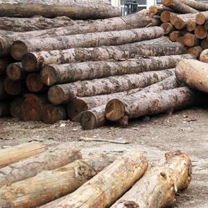 【白松】厂家,价格,图片_烟台芝罘江源木材有限公司