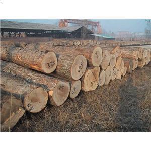 【红豆杉木材进口代理与简介流程】厂家