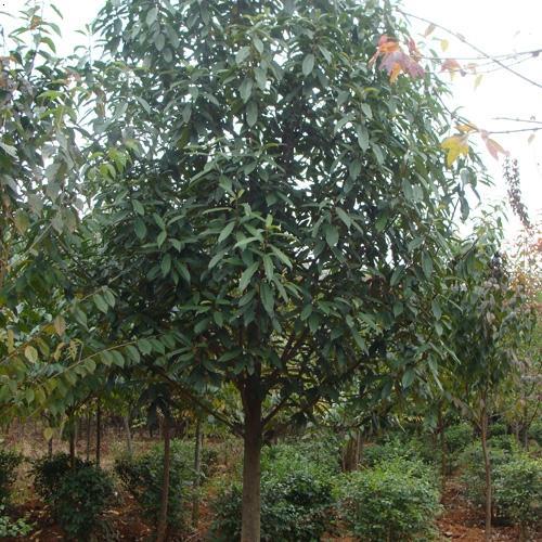 这种珍稀植物终于在我国云南省被发现了!