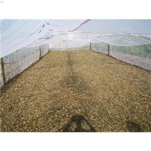 产品首页 农业 特种养殖动物 大棚