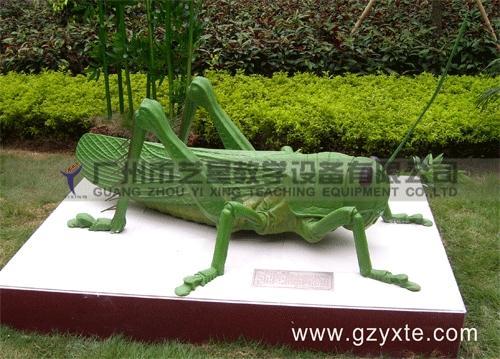 生物模型(节肢动物蝗虫)