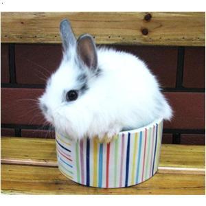 最小兔子图片大全可爱