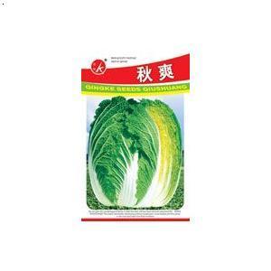 【早熟大白菜】厂家,价格,图片_青岛城阳科达蔬菜研究