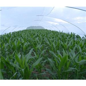 产品首页 农业 特种养殖动物 蝗虫养殖大棚