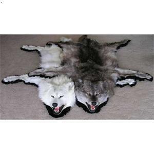 北极狼标本_天津市聚林轩野生动物标本有限公司-必途