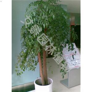 【幸福树】厂家,价格,图片