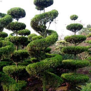 造型松树简笔画