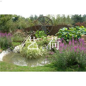 园林绿化湿地手绘图