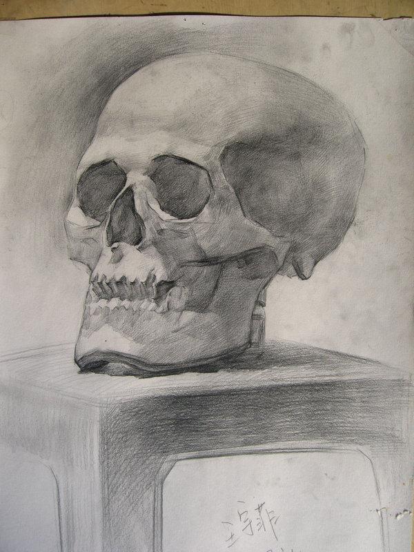 石膏头骨素描 素描头骨结构图头骨素描图片