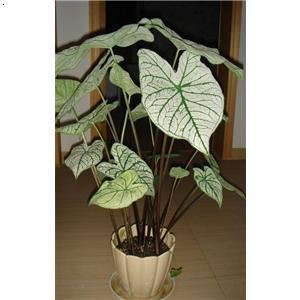 植物 武汉/办公室绿化植物租摆...