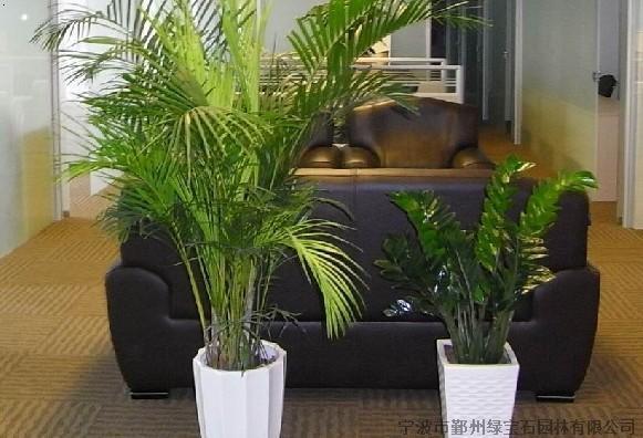 中式ps素材室内植物