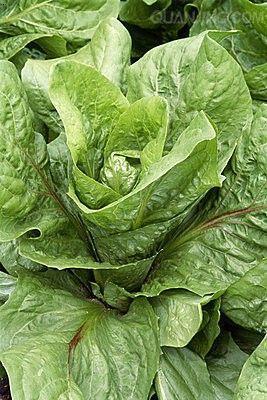 产品展示 冷鲜系列 绿色蔬菜  产品名称:绿色蔬菜 公司名称:山东犇康