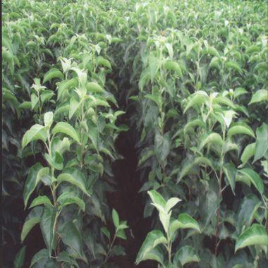 草莓无土立体栽培-种植专家
