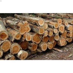 北美樱桃木进口报关原木材进口清关