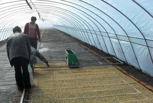 大棚种植_九台市兴隆镇金色未来种植农民专业合作社
