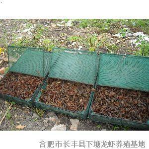 龙虾养殖池设计图纸c展示