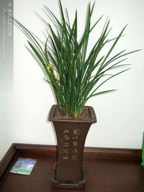 天平矢量图 蝴蝶兰花养殖