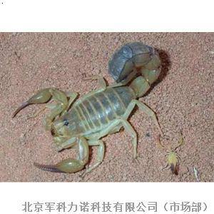 北京 蝎子/养殖养殖基地养殖加盟九号金蝎¥2680.00(组)...