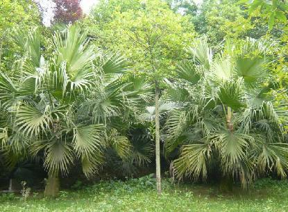供应绿色景观植物